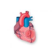 Easy Heart for iPad