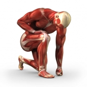 Human Muscles Info! for iPad